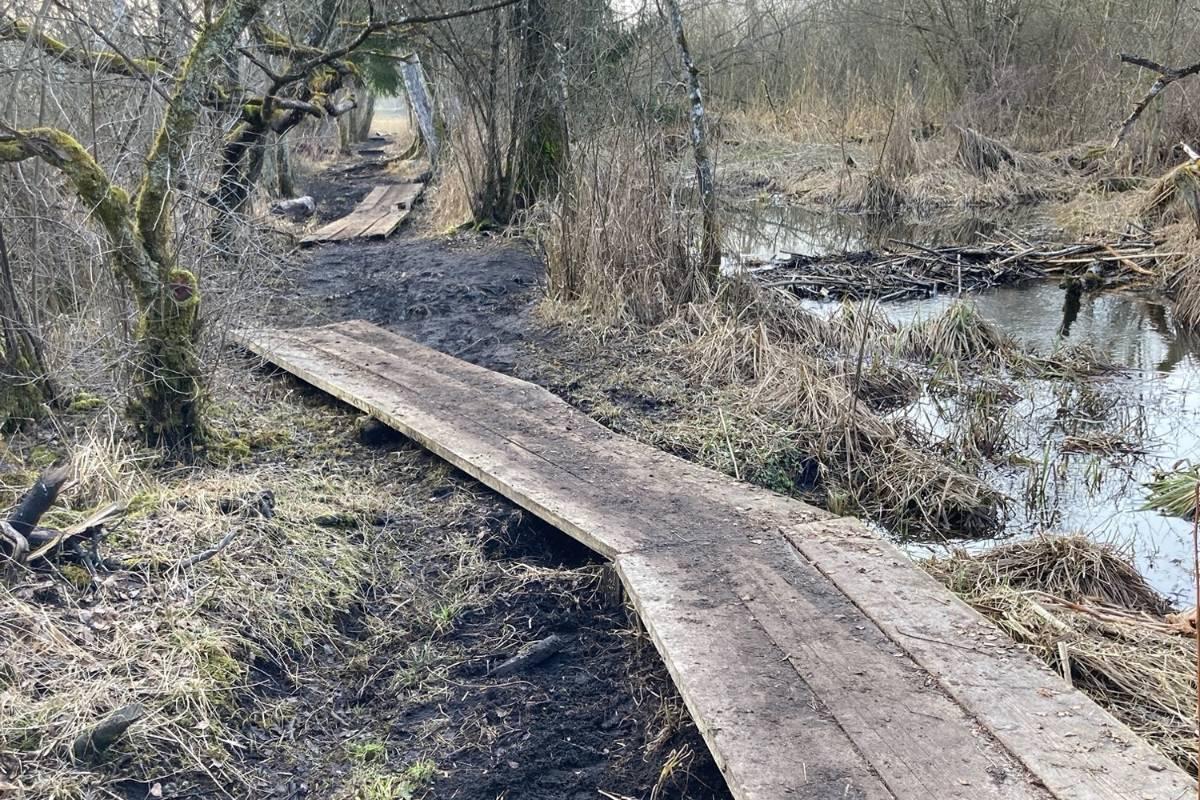 Das Hochwasser im Winter hatte die bestehenden Stege angehoben und verschoben