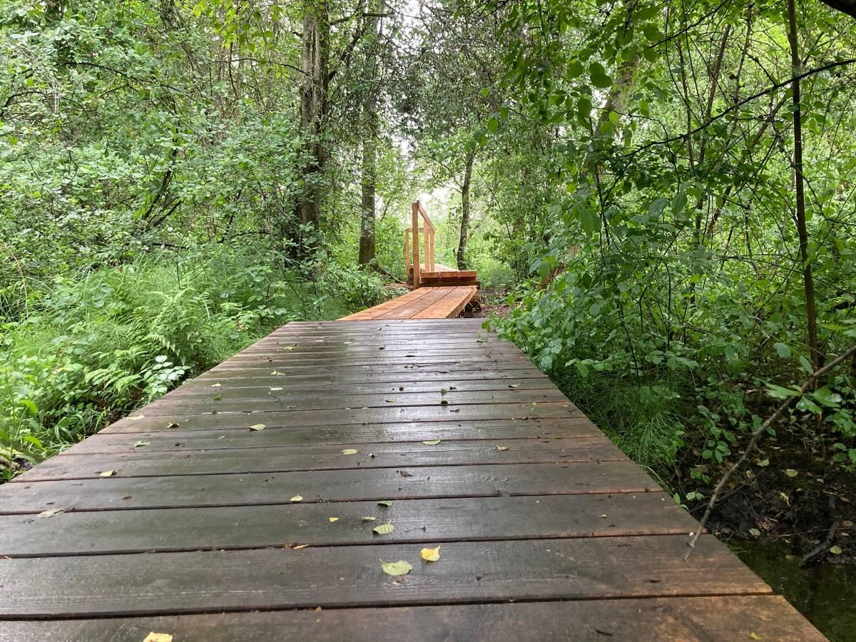 Nun ist der Moorwald endlich wieder begehbar