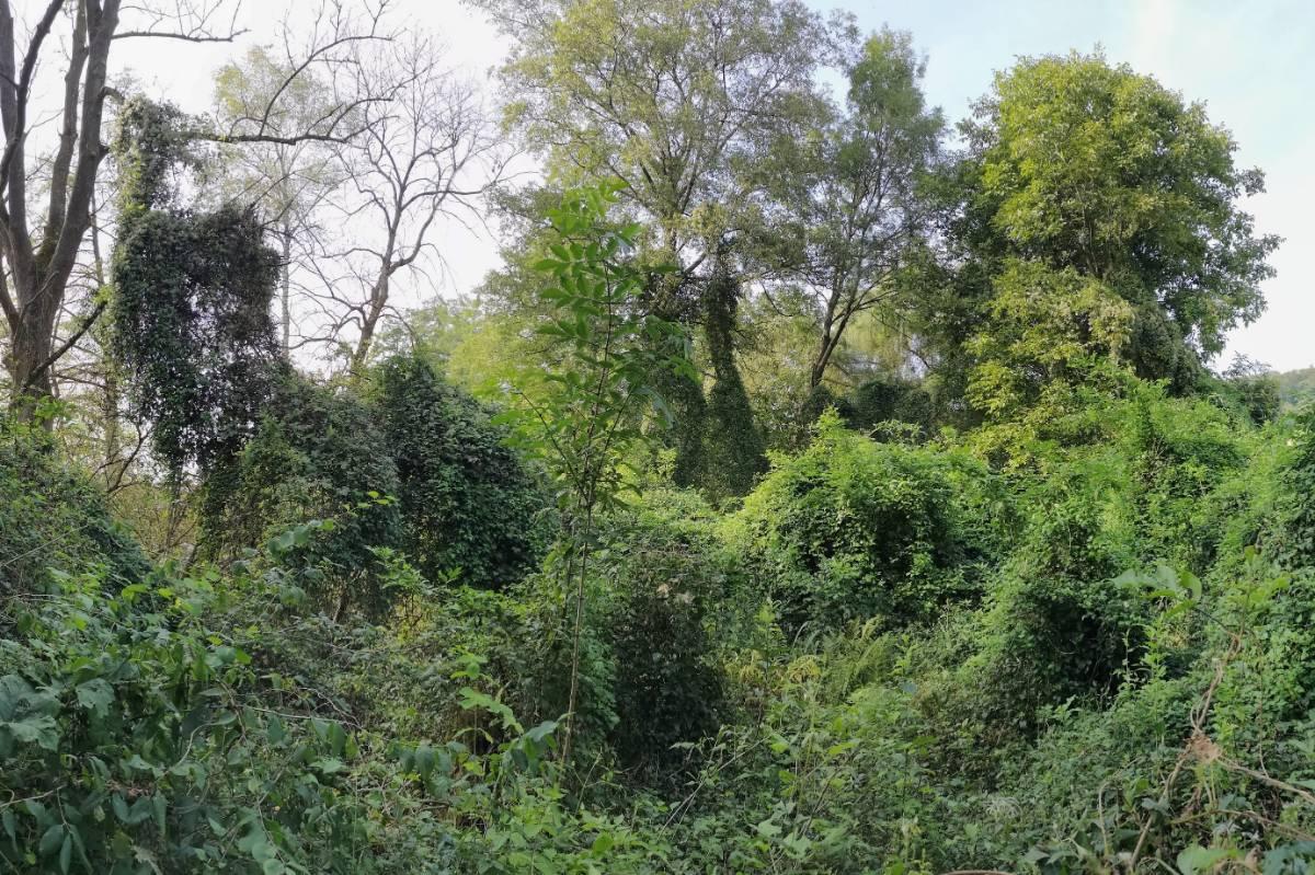 Zweiblatt-Eschenmischwald