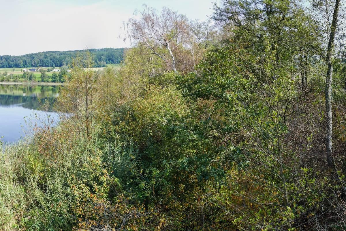 Föhren-Birkenbruchwald