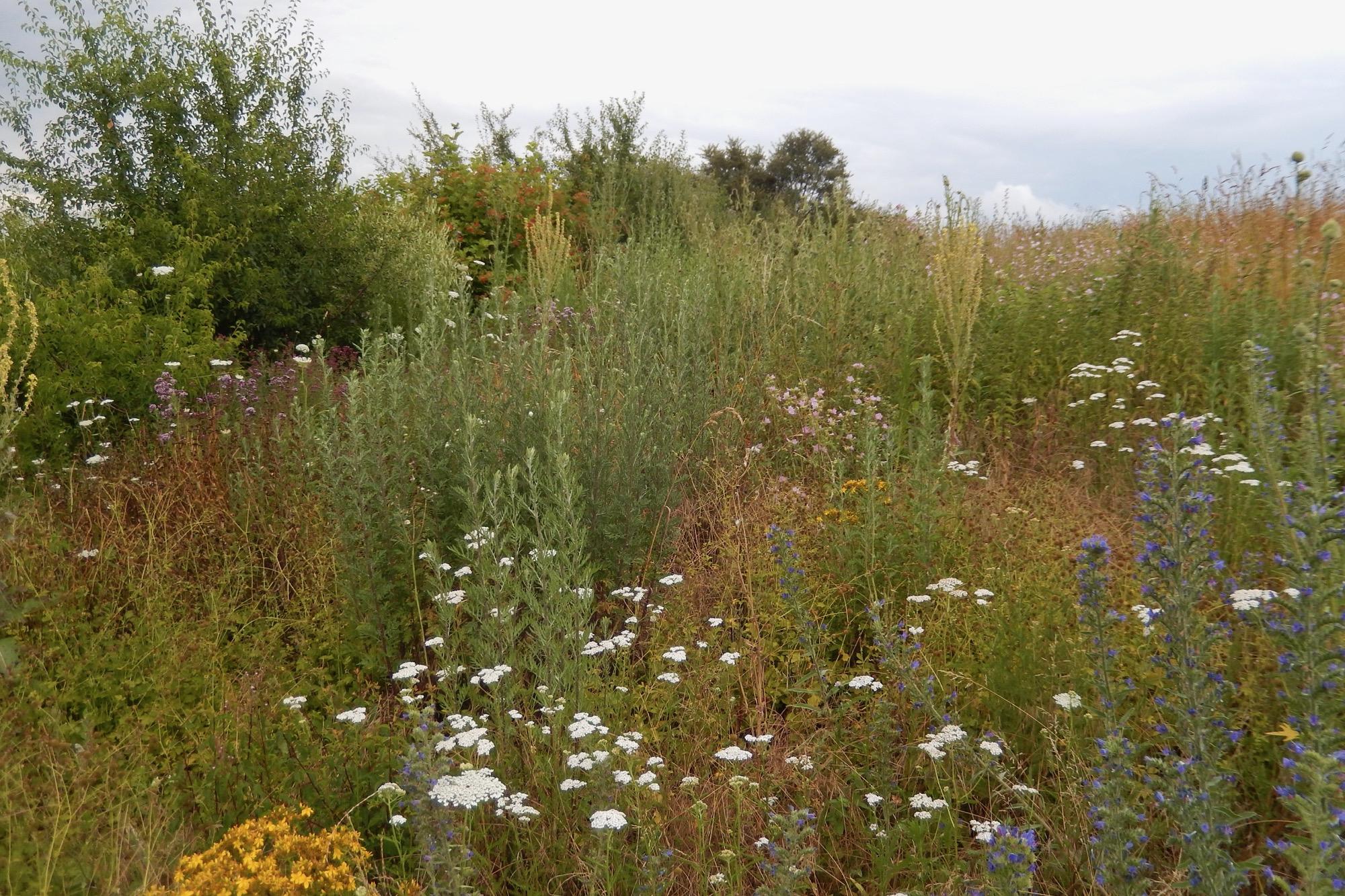 Das Blütenangebot verändert sich über das Jahr - Herbst