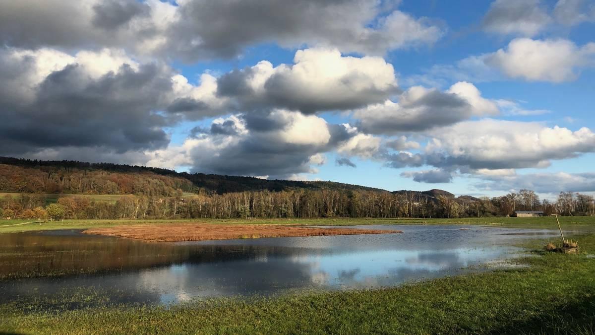 Der Söllsee, eine spontan vernässte Streuewiese im Bürgerriet