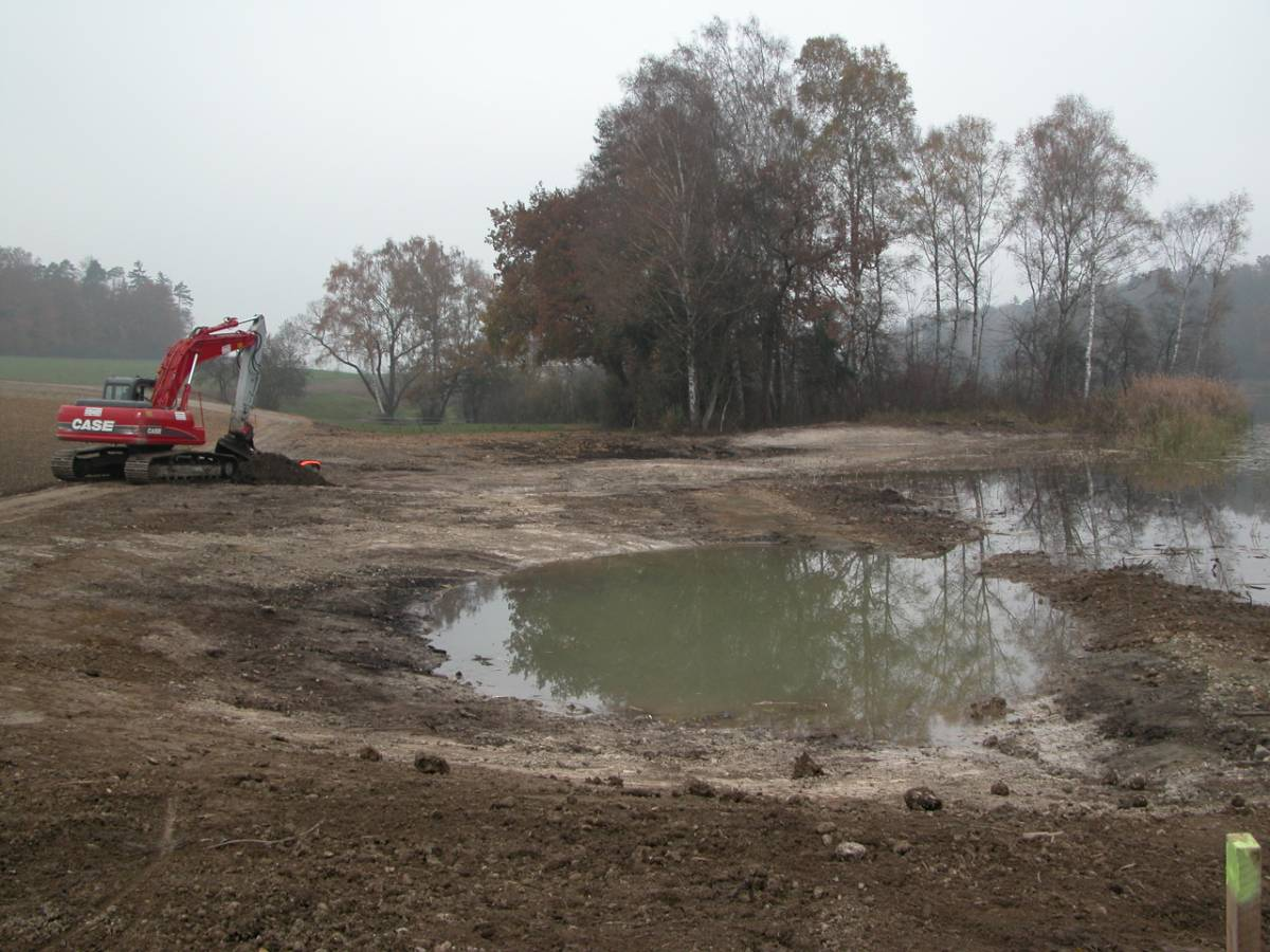 Im Riet 2003. Um den Uferbereich auszubauen, wurde der Feldweg nach Westen verlegt.