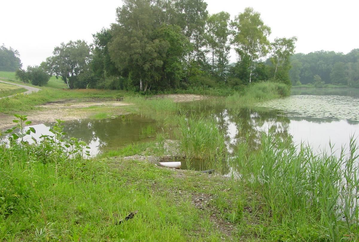 Im Riet 2004. Erste Vegetation nach den umfangreichen Bauarbeiten