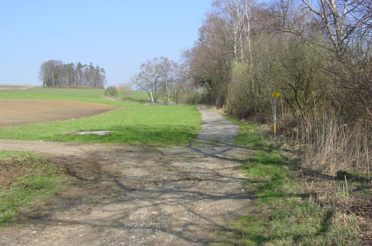 Im Riet 2002. Der alte Feldweg verlief direkt dem Ufer entlang.